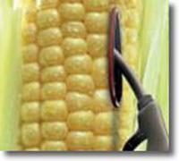 Etats-Unis : la « Promise Land » des biocarburants