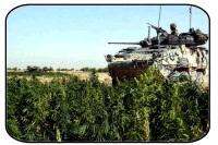 Canada : les forces militaires adoptent les véhicules écolos