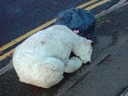 Achetez une Nissan Leaf, sinon les ours polaires vont mourir !