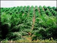 Le Japon charmé par les carburants verts de l'Indonésie