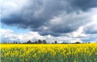 Suisse : un moratoire sur les importations de biocarburants voulu par les Verts