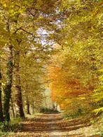 Belgique  :  les forêts wallonnes, le théâtre d'une chasse contre les engins motorisés !