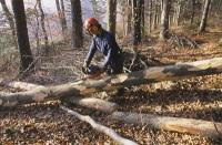 Les forêts italiennes, sources d'énergie verte !