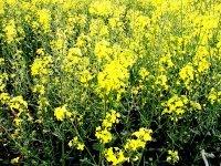 Belgique : Ecolo exige une certification environnementale et sociale des biocarburants