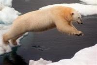 Pôle Nord : un Britannique nagera afin de sensibiliser le monde entier