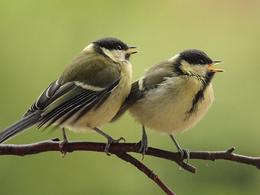 Quand le bruit des routes oblige les oiseaux à adapter leur chant