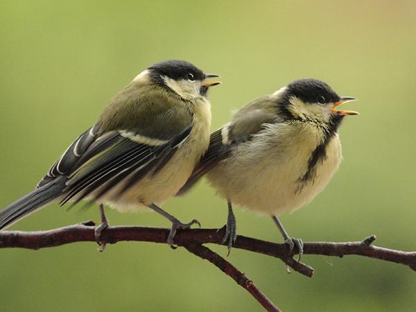 quand le bruit des routes oblige les oiseaux adapter leur chant. Black Bedroom Furniture Sets. Home Design Ideas