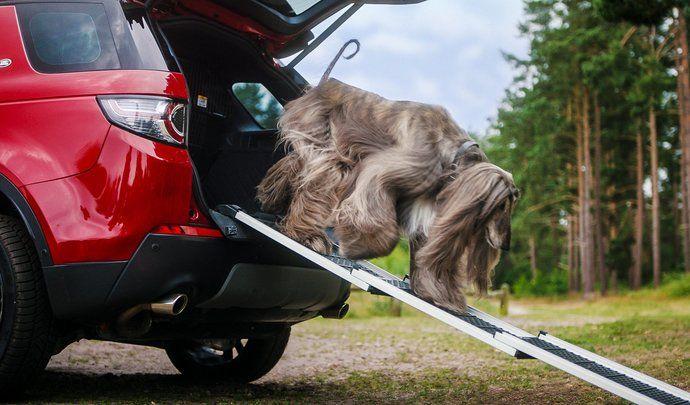 Land Rover lance des accessoires dédiés aux chiens