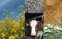Création de l'association France Biomasse Energie