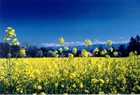 Les biocarburants sont-ils la solution ? Non, puisqu'ils ne réduisent pas les gaz à effet de serre