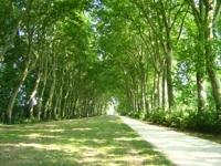 Bourges : tout savoir sur les liaisons douces