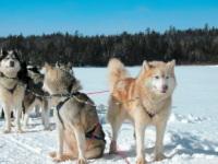 Nord du Canada : la motoneige pourrait être remplacée par le traîneau à chiens !