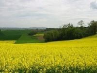 Etude GB : les biocarburants sont néfastes pour l'environnement