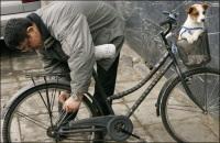 Pékin : la ville aux 50 000 vélos à louer jusqu'au JO !