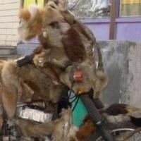 La moto de fourrure