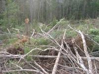 Ministère de l'Ecologie : l'appel d'offre biomasse 2 a eu du succès