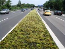 Université de Bonn : des mousses végétales, une solution pour lutter contre la pollution !
