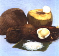 Majuro : de l'huile de coco pour moteur Diesel !