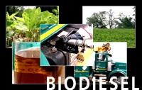 Espagne : de la graisse de poisson afin de produire du biodiesel !