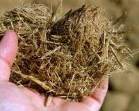 Novozymes : un accord avec le Brésil pour le développement de bioéthanol de la bagasse