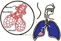 Etude : vivre près d'une autoroute porte atteinte au développement des poumons