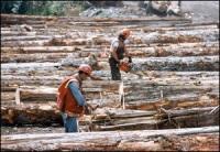 Québec : face à une crise forestière, une usine d'éthanol à partir de résidus de bois