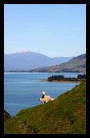 PNUE : la Journée mondiale de l'environnement 2008 en Nouvelle Zélande