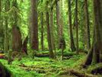 Etude : les forêts captent de plus en plus mal le CO2