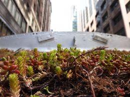 Un designer new-yorkais imagine un bus à toiture végétale