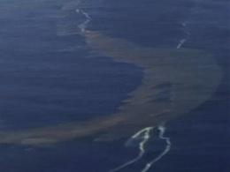 Une importante marée noire touche actuellement la Nouvelle-Zélande