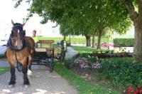 Vitry sur Orne : un cheval pour conduire les enfants à l'école !
