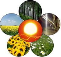 Rapport : développer la bioénergie, d'accord, mais avec prudence