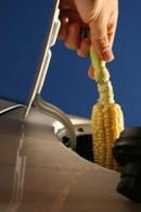 INRA : quelle sera la relation entre l'agriculture et les biocarburants après 2013 ?